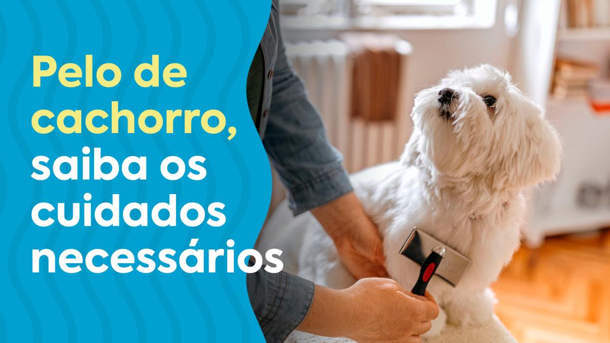 Foto de pessoa escovando o pelo do cachorro com uma escova adequada.