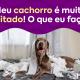 """Foto: Cachorro fazendo bagunça com um rolo de papel higiênico em cima de uma cama. Texto na foto: """"Meu cachorro é muito agitado! O que eu faço?""""."""