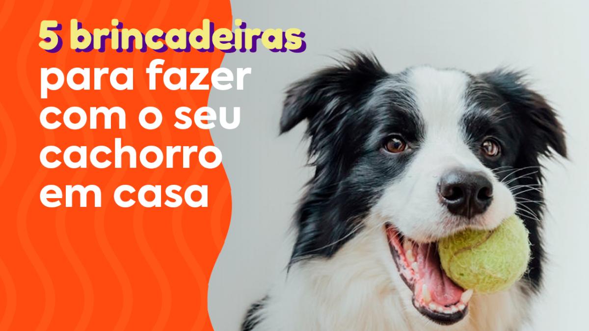 """Foto: Cachorro fazendo brincadeiras em casa com bolinha. Texto na foto: """"5 brincadeiras para fazer com o seu cachorro em casa"""""""